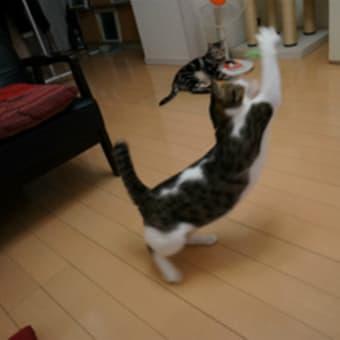 動かないネコ
