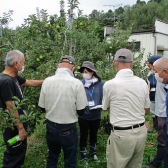 JA新みやぎあさひなりんご部会第2回現地検討会が開催されました