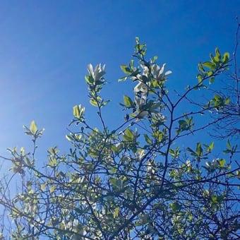 北国の花は、1シーズンくらい遅れて咲いていますねぇ〜〜