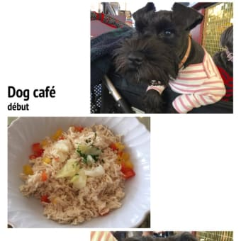 dog café début