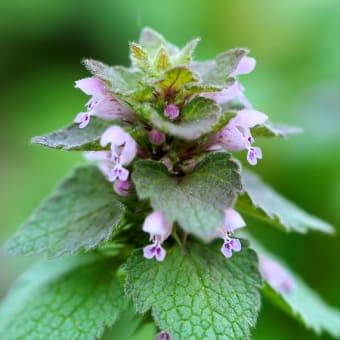 3月の雑草倶楽部、中目黒公園で撮り卸の花たちでございます。