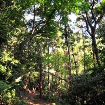 <森林浴 ②>  羽白山