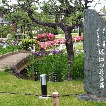 にしさんの花日記 花菖蒲 堀切菖蒲園