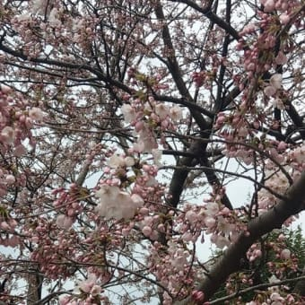 ≪予想≫桜花賞