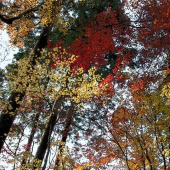 鶏足寺の紅葉 その5