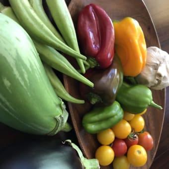農家から買って来た夏野菜は今が食べ頃!