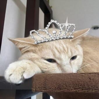 魔法の王子様・・・ごめんなさい!