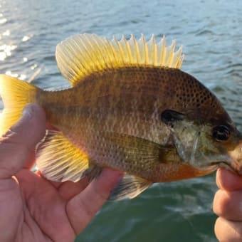 11月6日沖釣りのまとめ。