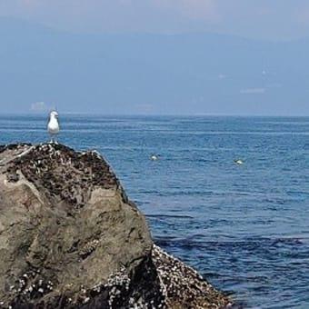 初島ダイビング