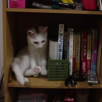 カラーボックス本棚で置物のマネ