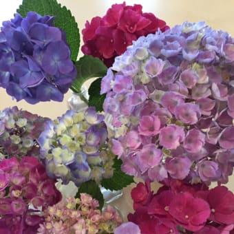紫陽花の花の色香に魅了され・・・
