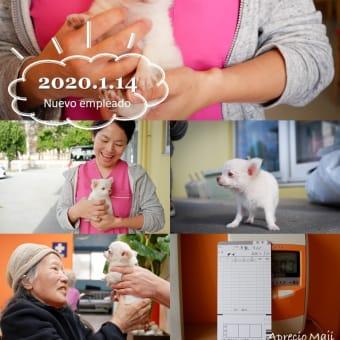 2020.1.14(火) 本日、デイサービスに犬社員