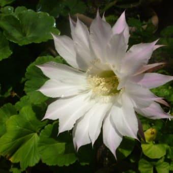 今夜は満月『ストロベリームーン』…(*´∇`*)  雨のおかげできゅうりとナスGET!