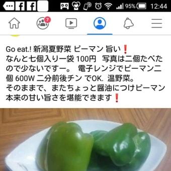 新潟夏野菜 ピーマン そのままが美味しい!