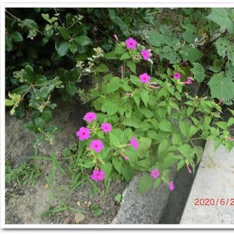 街角に咲く花📷街角ぶらり旅07-07