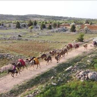 いまも昔ながらのライフスタイルをつづける遊牧トルコ人
