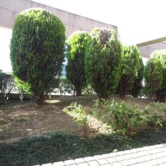 向暑の植栽の剪定作業が終わりました