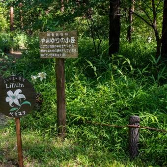 森林公園 やまゆりの小径
