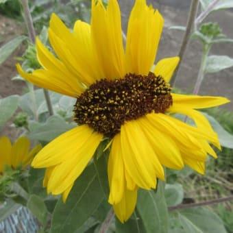 今 咲いている花