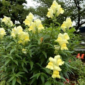 アンデルセン公園の花 その1