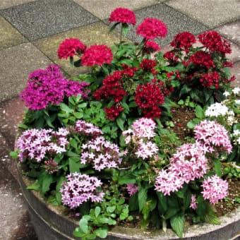 散歩道の花壇