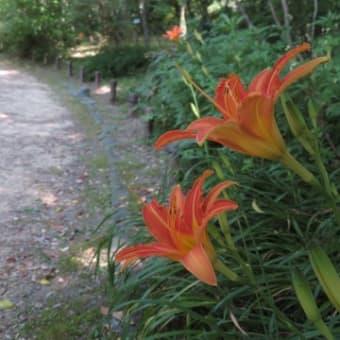 京都府立植物園で今咲いている花~2020/6/5現在