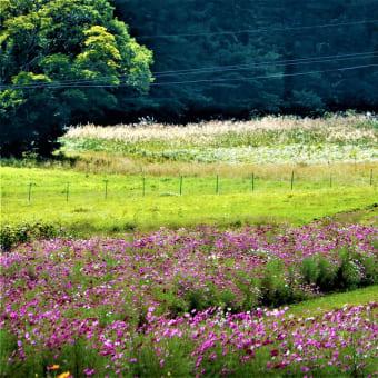 2019・9・15 黒姫高原コスモス園ダリア園は花盛り