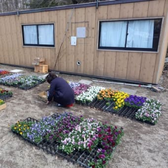 自宅庭のお花