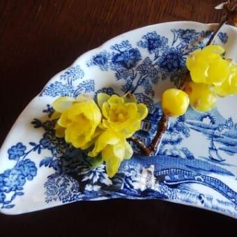 蝋梅 と 水仙