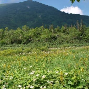 2013/08 夏の栂池 ~白馬小谷から~