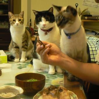 魚が美味しい!