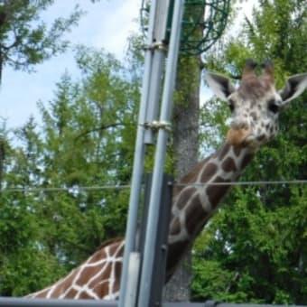 動物園日和