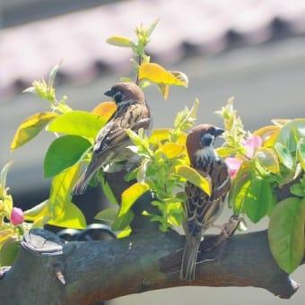 花梨の花と令和の目標