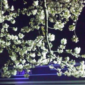 2012/04/05 THE BACK HORN&NCIS渋谷AX