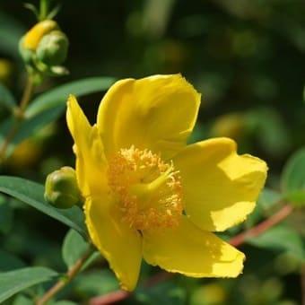 野川公園のお花も少々