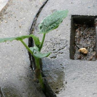 当家排水口の蓋に…