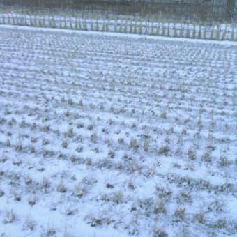雪が降る街2