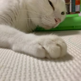 うぅ…眠いニャう。