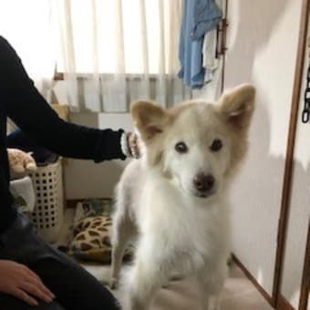 里子に行ったレオちゃんのお家へ訪問しました