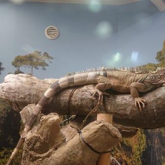 野毛山動物園に行ってきました。