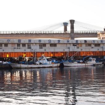 小田原早川漁港で水揚げされた新鮮な魚介類を皆様にお届け❗ 水産事業部