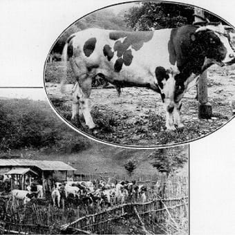 VOL92  明治の三陸の産業14「畜産4 乳牛②」 (九戸郡)