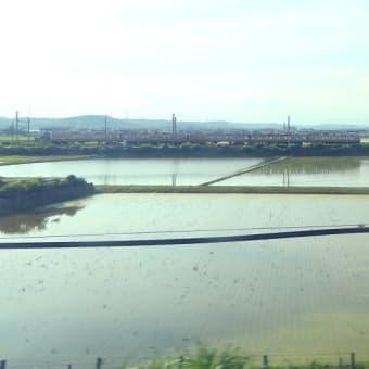 東海道本線は袋井付近の田んぼと普通列車 (2020年6月 新幹線から)