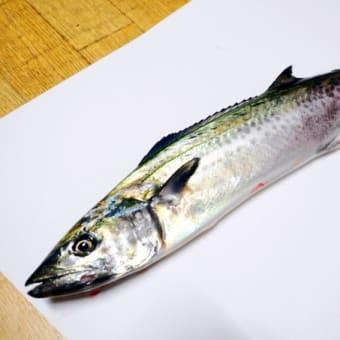 ららぽーと湘南平塚 漁師の浜焼 あぶりや 日替わりお奨め丼