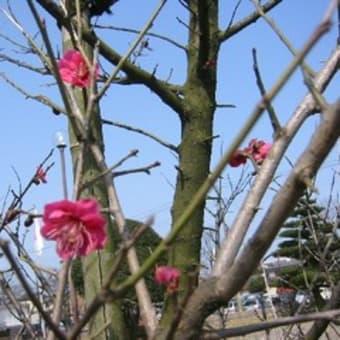 小さい春から~・・・
