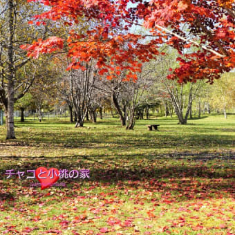 昨日見た紅葉と動物たち