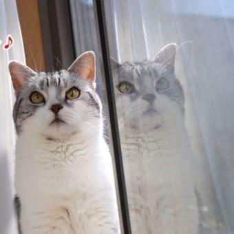 千代ちゃんの朝~♪