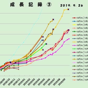 月末の成長記録~~2019年9月・大きい組~2018孵化仔