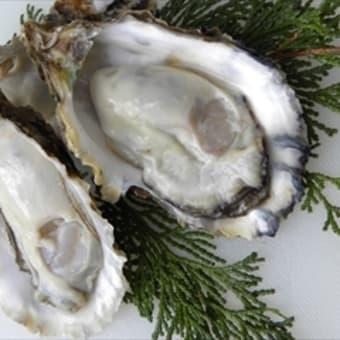 味宿きぬや 久美浜牡蠣食べごろです
