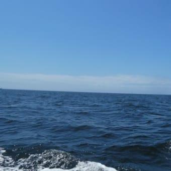 『スルメイカ釣り』@東京湾口